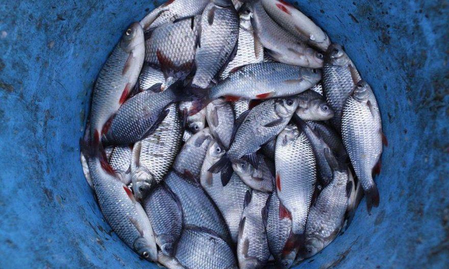 нерест 2021, заборона ловити рибу, заборонили ловити рибу, нерестовий вилов риби