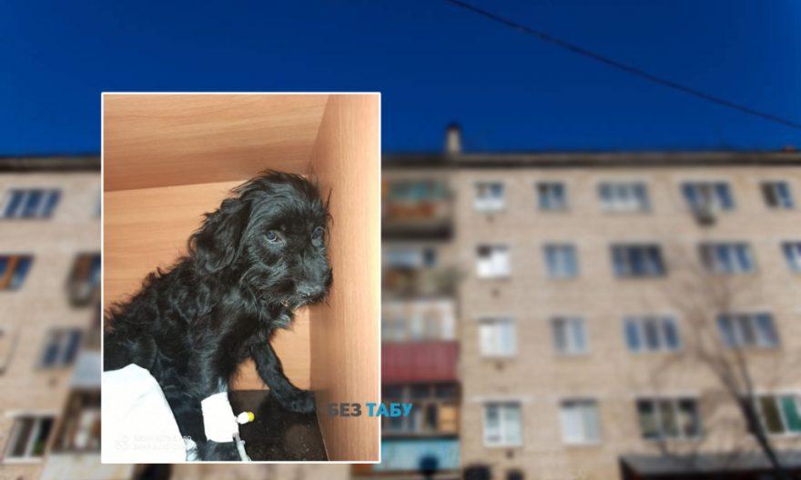 Викинув собаку з 5 поверху