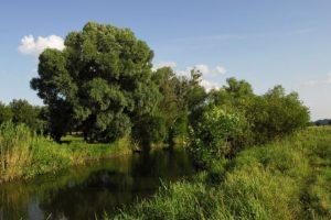 річка рось, білоцерківська прокуратура, повернули землі на білоцерківщині