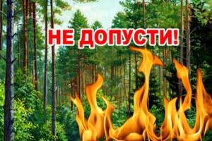 пожежі на київщині, екосистеми в київській області, екосистеми на київщині, пожежі лісів на київщині