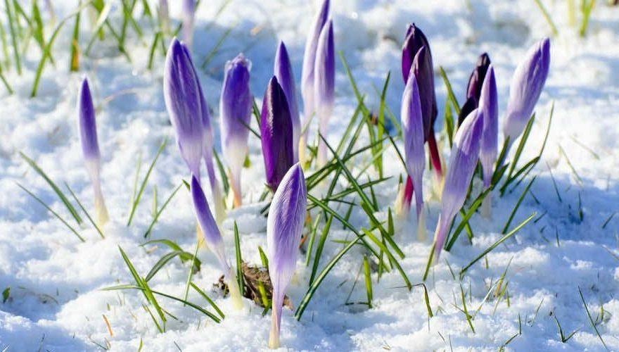 вихідні в березні, свята в березні