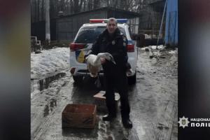 поліція білоцерківщини врятували лебедя