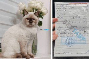 поранений кіт біла церква стріляли у кота
